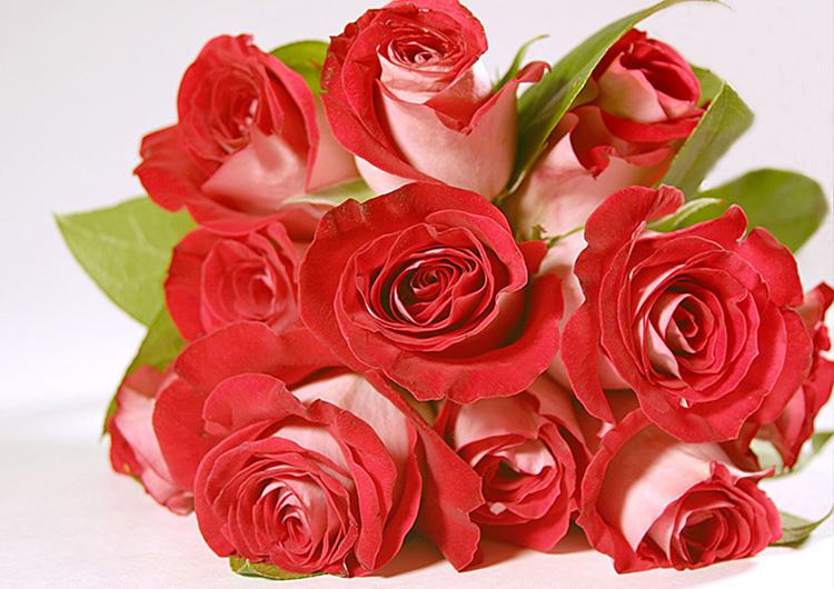 port_roses