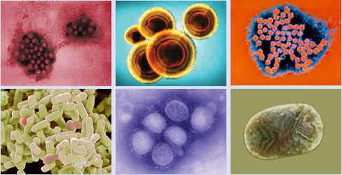 various-viruses-bacteria