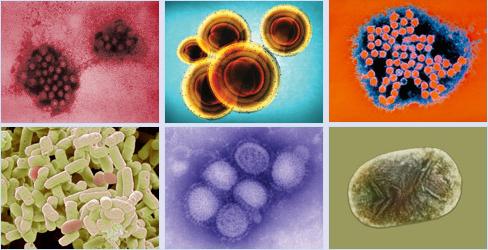 يقتل البكتيريا بسرعة وبطريقة صحية