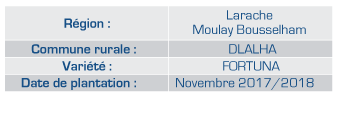 Moreco Resultats et effects les produits orthagrow FRAISES au Maroc-02