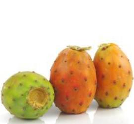 Moreco Resultats et effects orthagrow CONTROL pou récolte des CACTUS figues de barbaries au Maroc-02