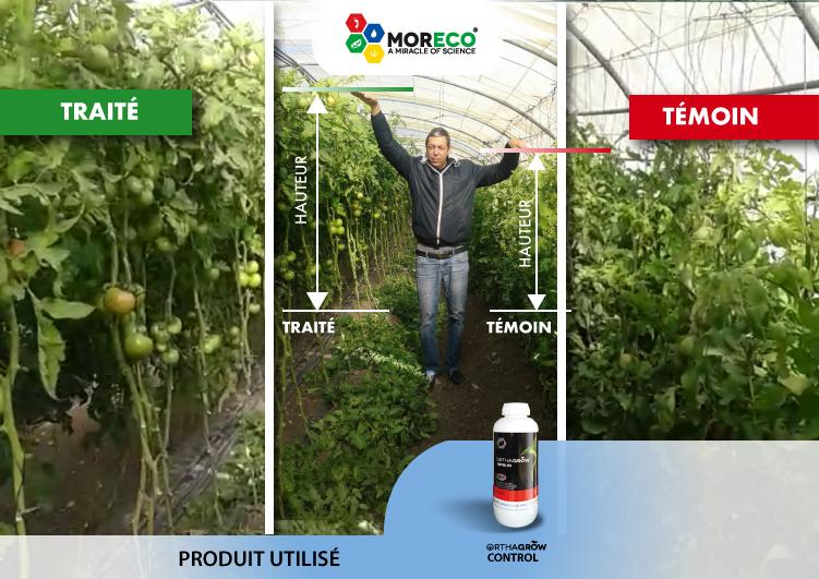 03- Résultats sur les tomates